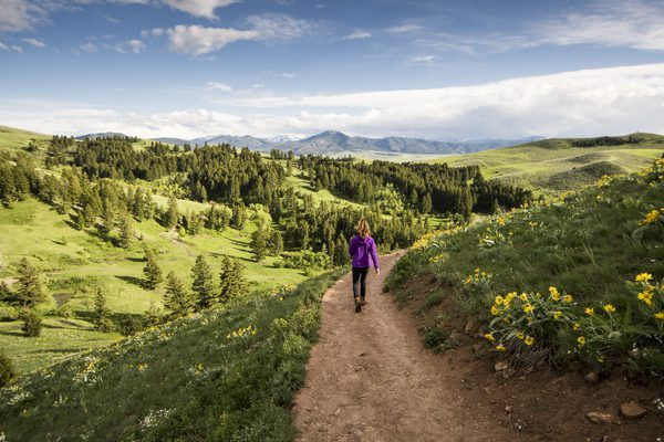 montana sales leads